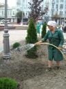 За суботу на Майдані Незалежності виросли дерева