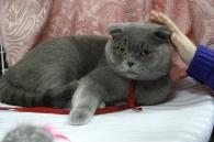 На котячій виставці вінничанам показали 120 пухнастиків