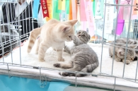 На виставці чотирилапих, вінницький котик здобув приз глядацьких симпатій