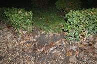 Вже вдруге за місяць у Вінниці біля пам'ятного знаку Жертвам Голодомору крадуть зелені насадження