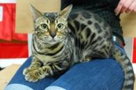 Фоторепортаж з Міжнародної виставки котів у Вінниці