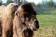 Вінницький зоопарк поповнився маленькими мешканцями і оновлюється