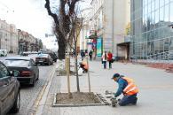 До п'ятниці «зеленбудівці» завершать висаджувати липи по вулиці Соборної
