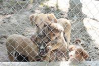 Притулок для тварин «Планета» отримав від міської ради засоби для відлову безпритульних собак