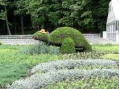 Вінничани знову можуть милуватися об'ємною клумбою у вигляді черепахи