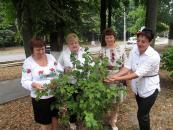 Працівники вінницького територіального центру соціального обслуговування до Дня Незалежності знову садили калину