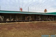 На Вiнниччинi функцiонує унiкальна ослина ферма, де лiкують дiток за допомогою цiлющого молока