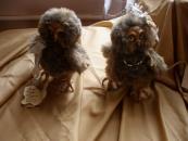 До 14 квітня ляльки вінницьких майстринь-рукодільниць оселились у бібліотеці