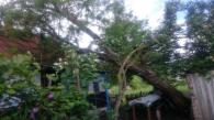 На Вінниччині через сильний вітер дерево впало на будинок старенької бабусі