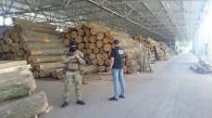 Співробітники СБУ викрили нелегальний бізнес по масштабній вирубці дерев в лісгоспах Вінниччини
