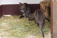 Вінницький зоо-дворик кличе подивитись на звірят-малят