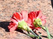 Фоторепортаж покладання квітів з нагоди 71-річниці завершення Другої світової війни