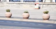 На острівках безпеки зеленбудівці встановили кашпо власного дизайну з вічнозеленими рослинами