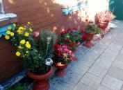 В Калинівці любительці чужого садового декору світить до 5 років ув'язнення