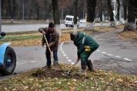 Перелік вулиць Вінниці, на яких цьогоріч висадили нові дерева, кущі та троянди