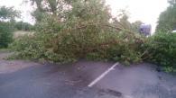 Вінницькі рятувальники прибирають з доріг повалені вчорашнім вітром дерева