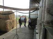"""В селі на Вінниччині відкрили лінію по виробництву """"золотого вугілля"""" - паливних брикетів із соломи"""