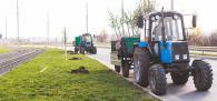У Вінниці висадять 700 дерев