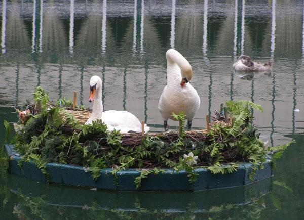 Озеро в Центральному парку Вінниці