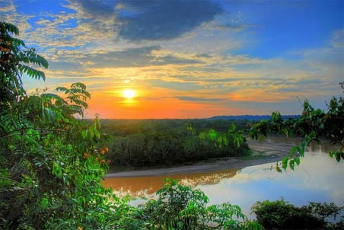 Джунглі Амазонії