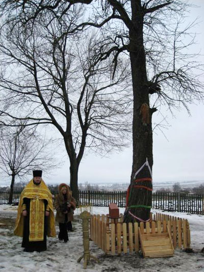 Настоятель храму святого Михайла отець Ростислав із села Довгополівка Тиврівського району показує дерево, на якому побачили образ Ісуса Христа