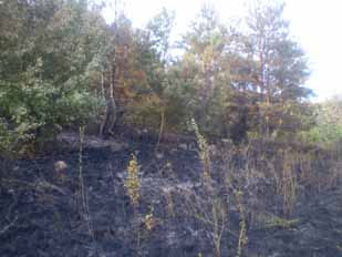 Пожежа в лісі в Чечельницького району