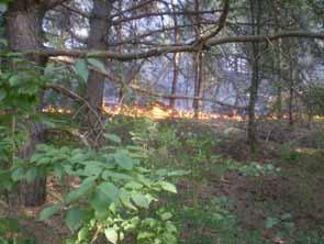 Пожежа в лісі с. Берізки Чечельницького району