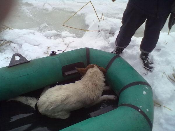 працівники МНС врятували собаку, яка тонула на річці Південний Буг