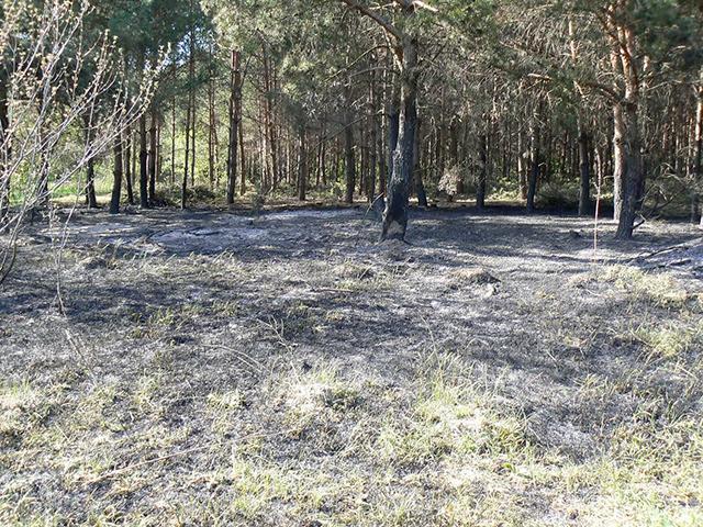 На Вінниччині пожежа знищила 3 га лісового масиву