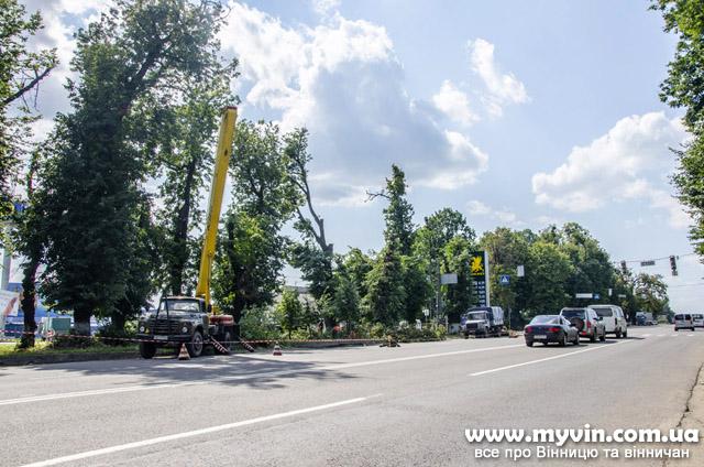 На Хмельницькому шосе різали легендарні липи