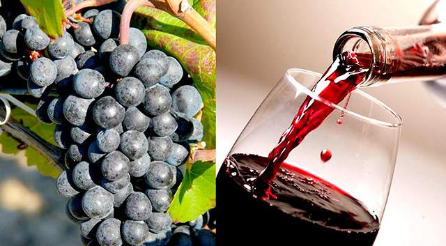 """Свято вина """"Божоле Нуво"""" та фірмові страви"""