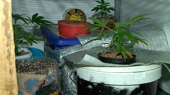 Вінничанин влаштував у квартирі міні-теплицю, в якій вирощував коноплю