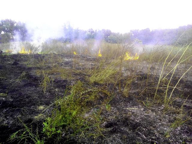 Через необережне поводження невідомих осіб із вогнем рятувальники п'ять разів за добу гасили пожежі в екосистемах