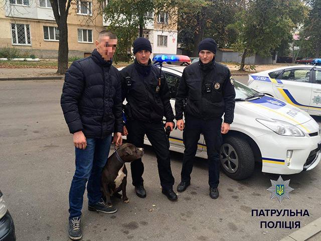 """Небезпечний """"пасажир"""" у маршрутці:у Вінниці бійцівський пес, який  втік від господаря, забіг до маршрутки"""