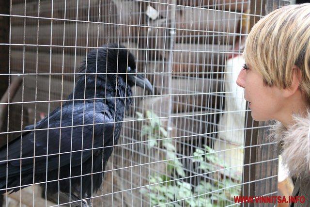 """У Вінницькому зоодворику ворон Карлуша вітається з відвідувачами та """"розмовляє"""""""