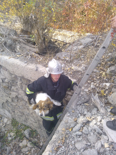 Вінницькі рятувальники визволили собаку, яка потрапила в пастку