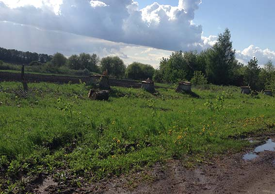 На Вінниччині незаконно вирубили майже 800 дерев