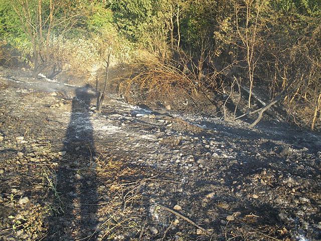 На Вінниччині через необережність із вогнем невідомої особи загорілась  лісополоса