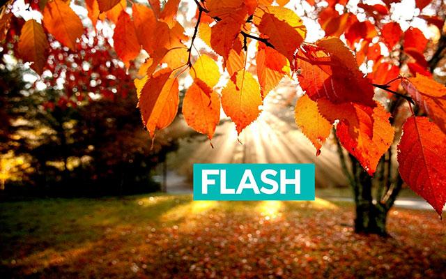 Запишися в школу англійської мови FLASH до 31 серпня, та законсервуйте для себе стару ціну!