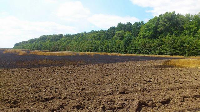 На Вінниччині пожежа на полі знищила майже 5 га пшениці