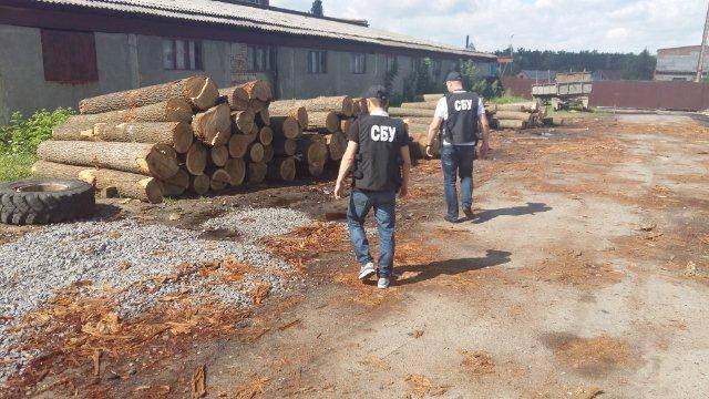 Працівники СБУ викрили нелегальний бізнес по масштабній вирубці дерев в лісгоспах Вінниччини