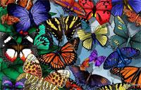 Виставку Тропічних Метеликів