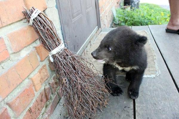 Медвежонок поселился в кабинете директора Винницкого зоопарка