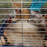 «Хвіст-фест» - 5 сезон: у Вінниці в чергове проведуть ярмарок допомоги безпритульним тваринам